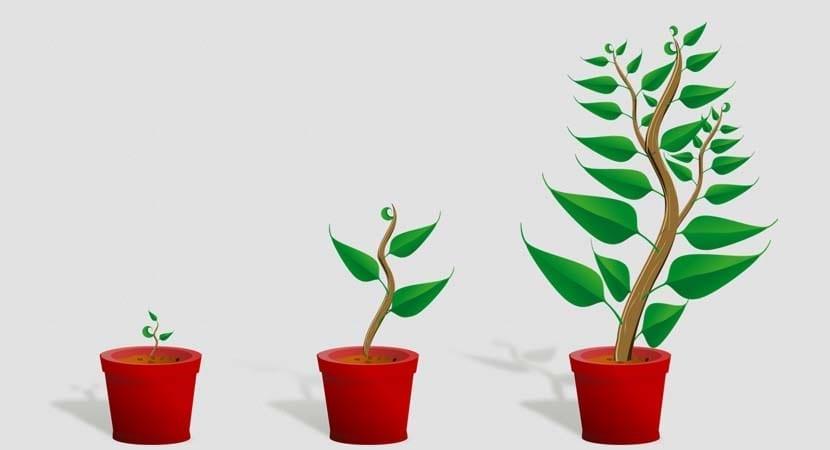 crecimiento-empresarial