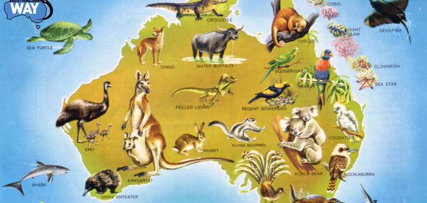 fauna-de-australia
