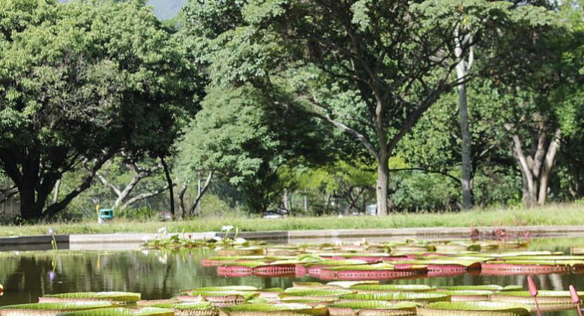 Jardín en Venezuela