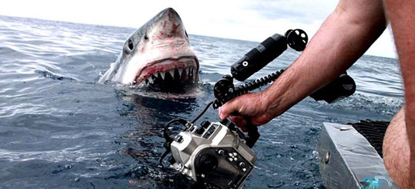 tiburon-blanco-en-australia