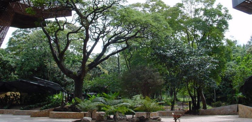 Encantador viaje por medell n for Bodas jardin botanico medellin