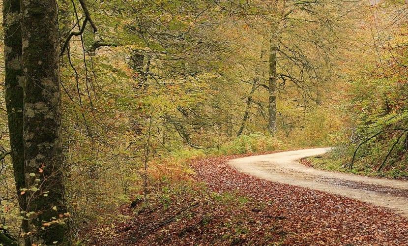 Rutas Selva de Irati