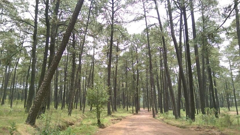 Bosque Nanacamilpa