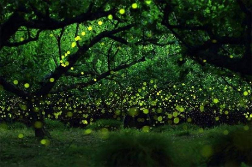 Santuario de las luciérnagas