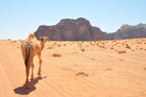 Viajes por Wadi Rum