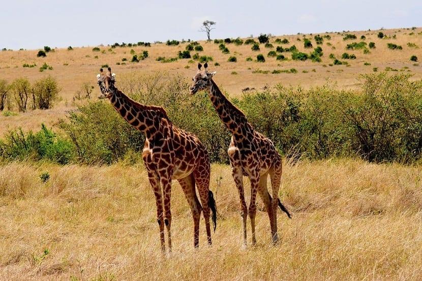 Visitar Tanzania