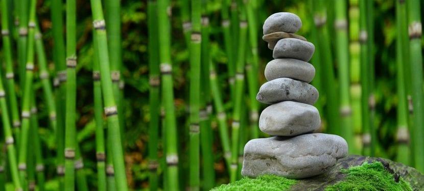 La cultura japonesa : zen y bambú