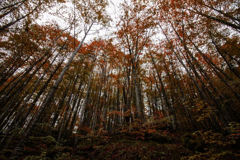 Selva de Irati en País Vasco
