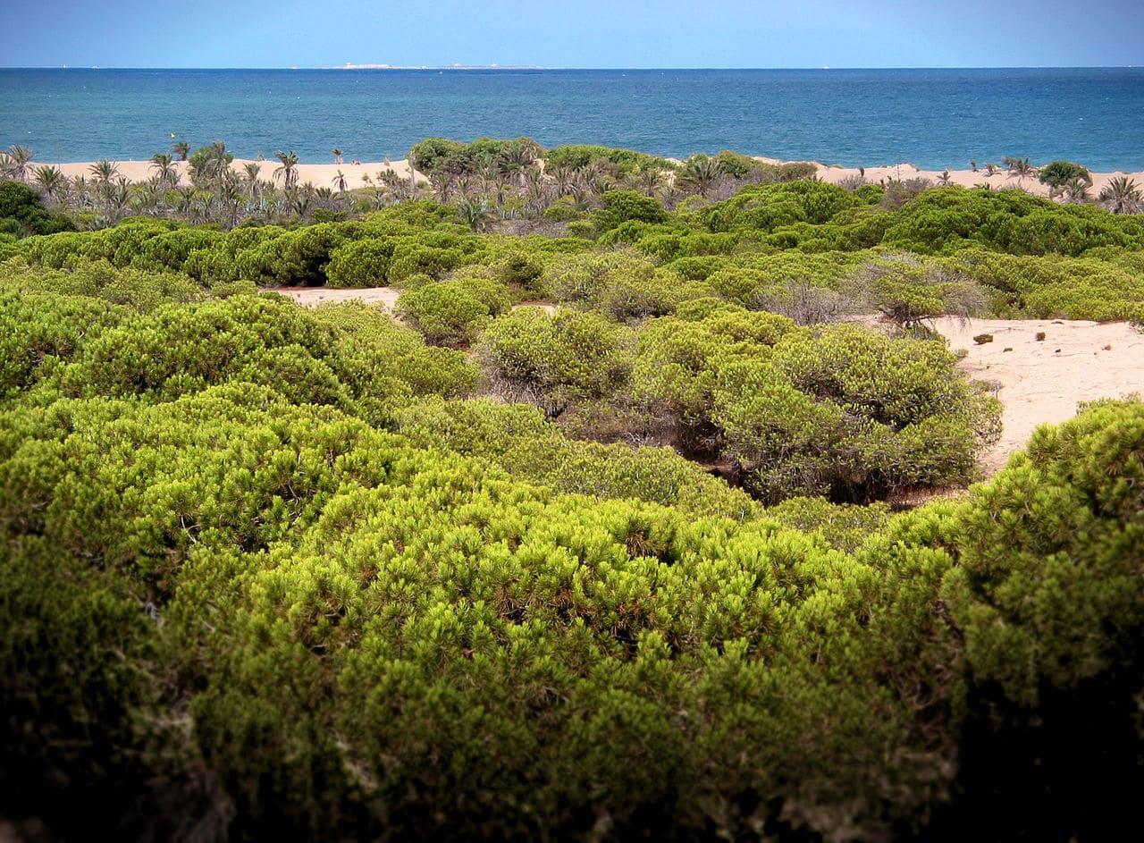 Las dunas de Guardamar