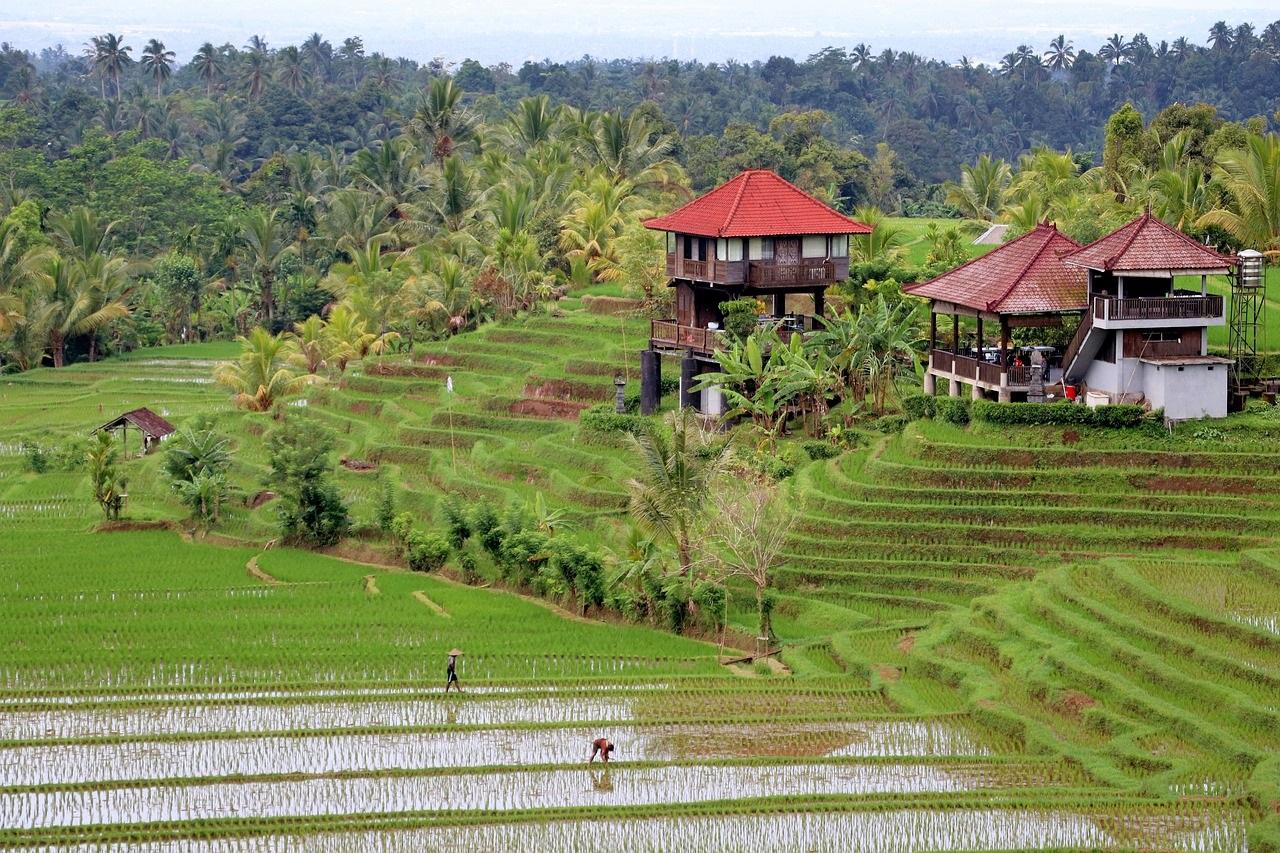 Naturaleza de Bali