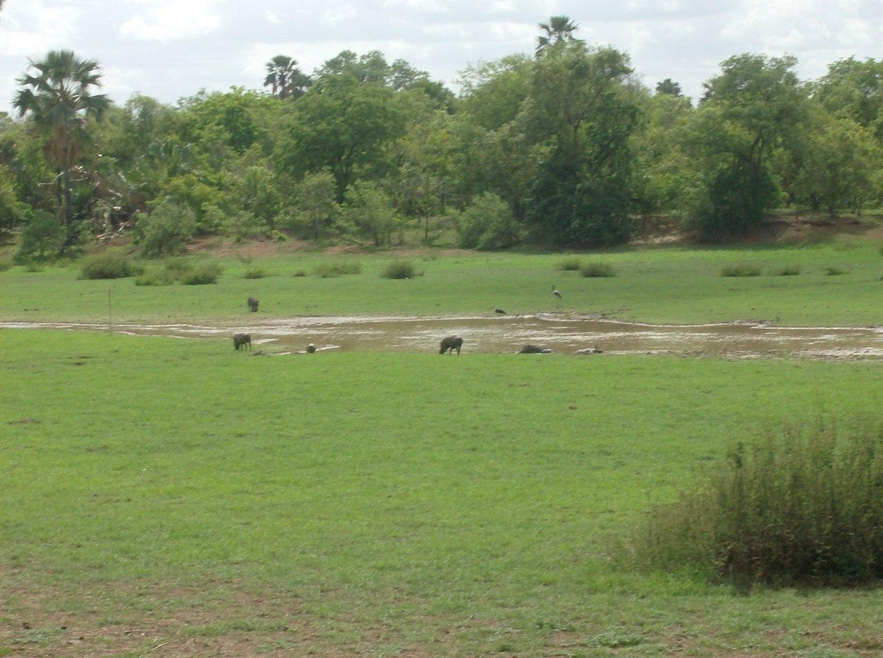 El Parque Natural de Niokolo-Koba
