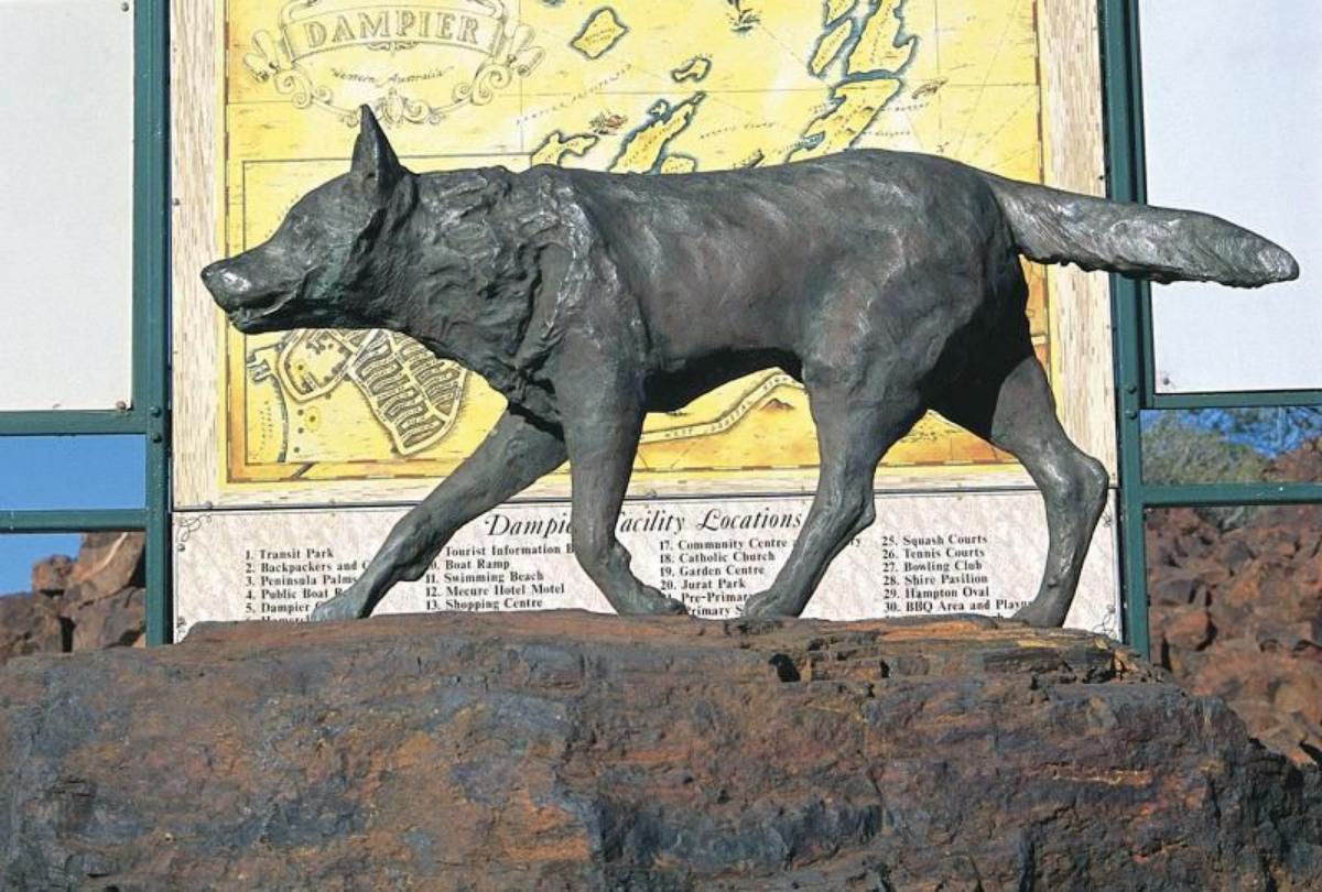 Red Dog perro rojo Australia