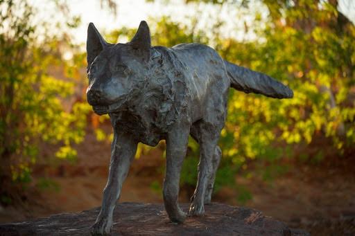 perro rojo australia