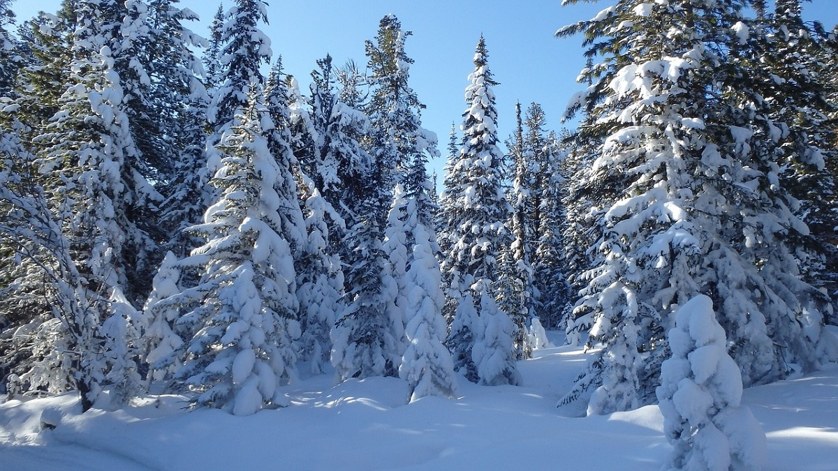 taiga invierno