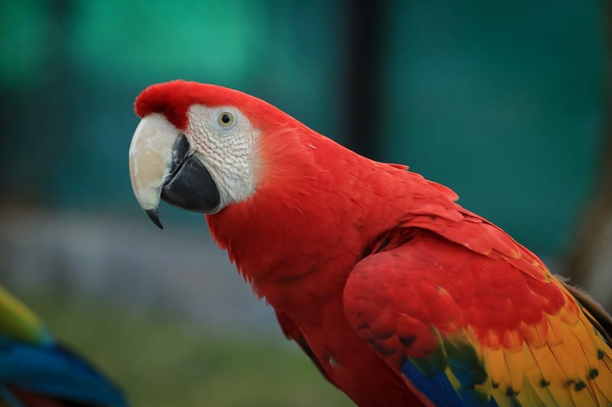 aves selva amazonica